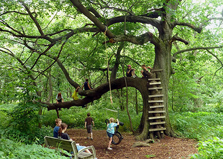 6 children climbing on a large branch of a tree
